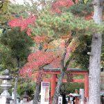 奈良紅葉2013
