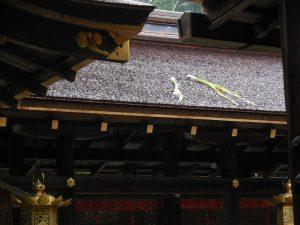 屋根の上の菖蒲