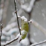 IMG_4078★木の葉